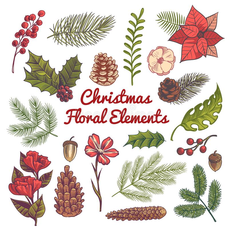 Xmas floral set. Flower christmas decorations, watercolor elements with branches of vintage traditional plants and stock illustration