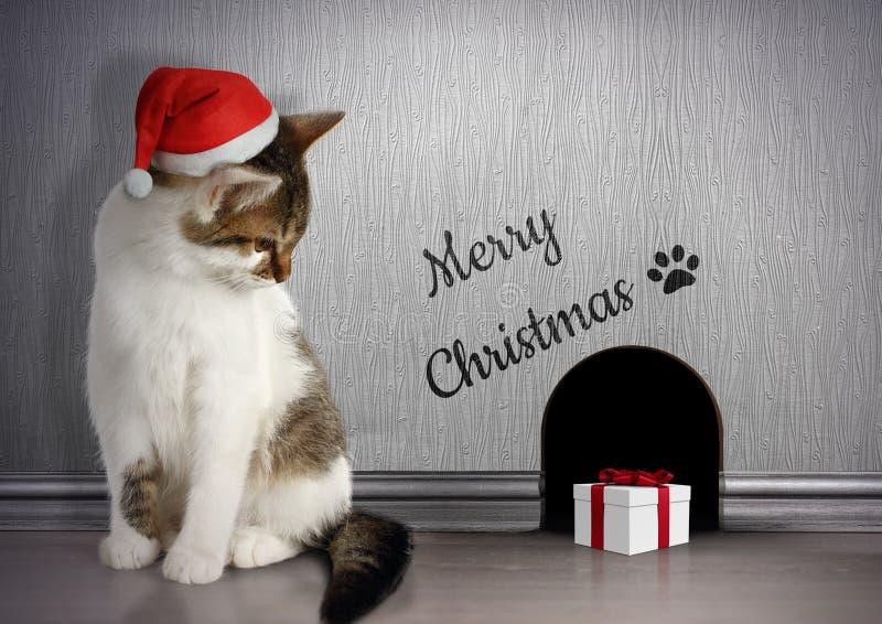 Xmas gratuluje pojęcie, Śmiesznego kota z Santa kapeluszem i prezenta, zdjęcia royalty free