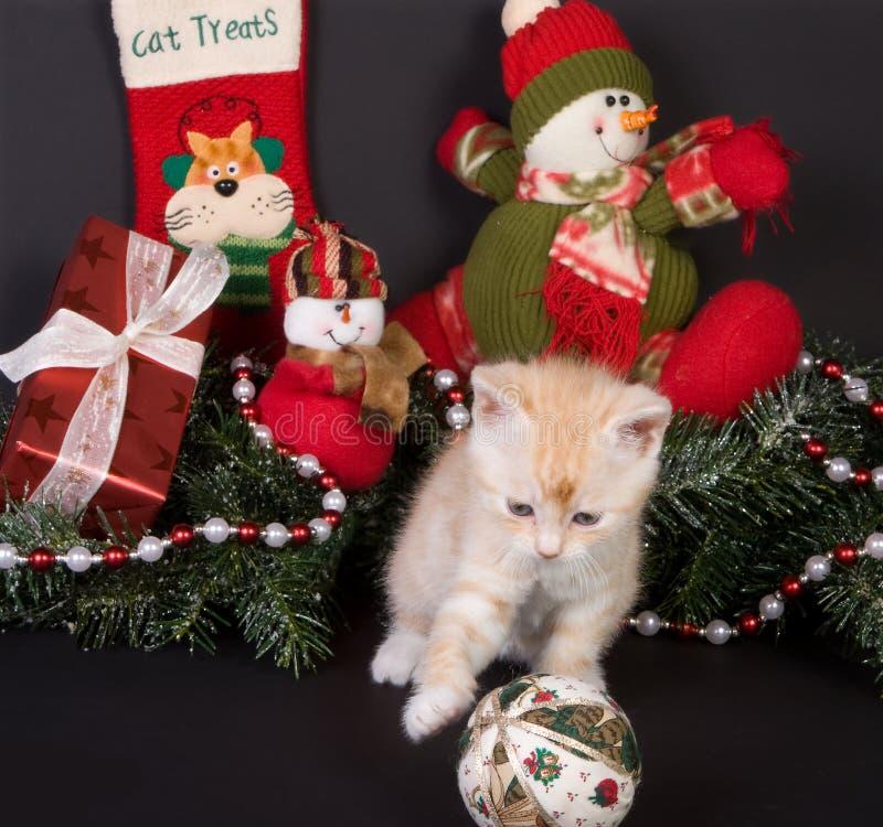 Xmas kitten royalty free stock images