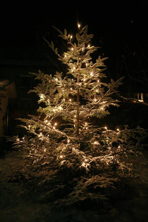 Xmastree stock afbeeldingen