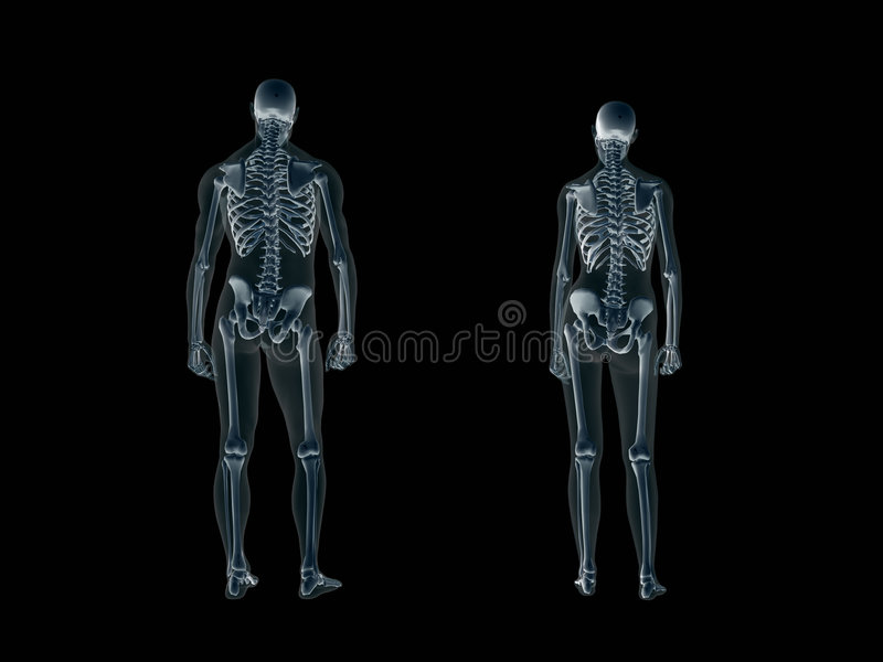 Xray, x-ray of the human body, man and woman. royalty free illustration