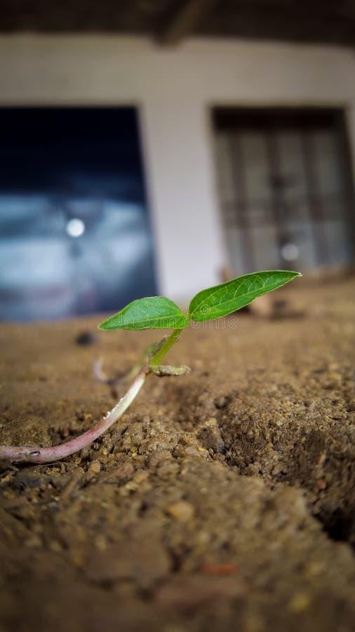 xxl för leaf för bakgrundsmapp arkivfoto