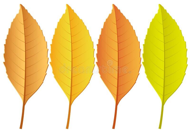 xxxl размера листьев изображения осени иллюстрация вектора