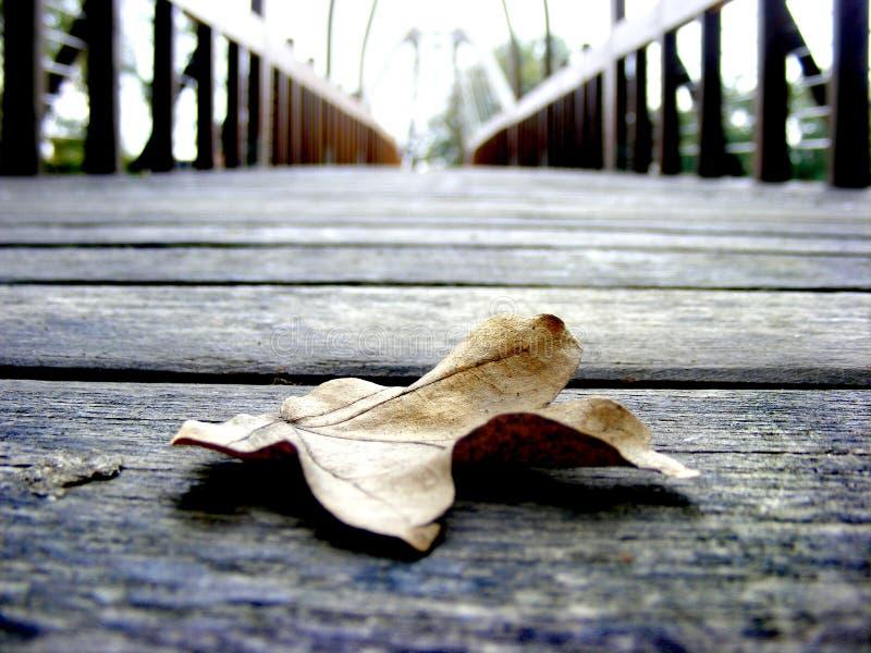 xxxl размера листьев изображения осени стоковая фотография