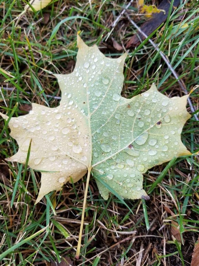 xxxl размера листьев изображения осени стоковое фото