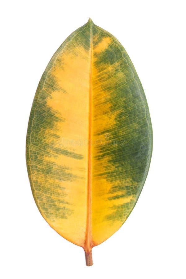 xxxl размера листьев изображения осени стоковые фото