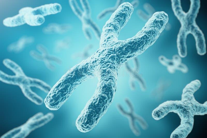 XY-хромосомы как концепция для исследования генетики генотерапии или микробиологии символа человеческой биологии медицинского 3d иллюстрация вектора