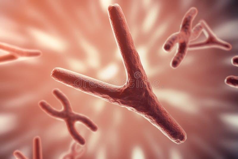 XY-kromosomer som ett begrepp för för symbolgen för mänsklig biologi medicinsk terapi eller mikrobiologigenetikforskning 3d arkivfoton