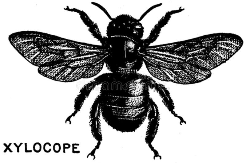 Xylocope-oa Free Public Domain Cc0 Image