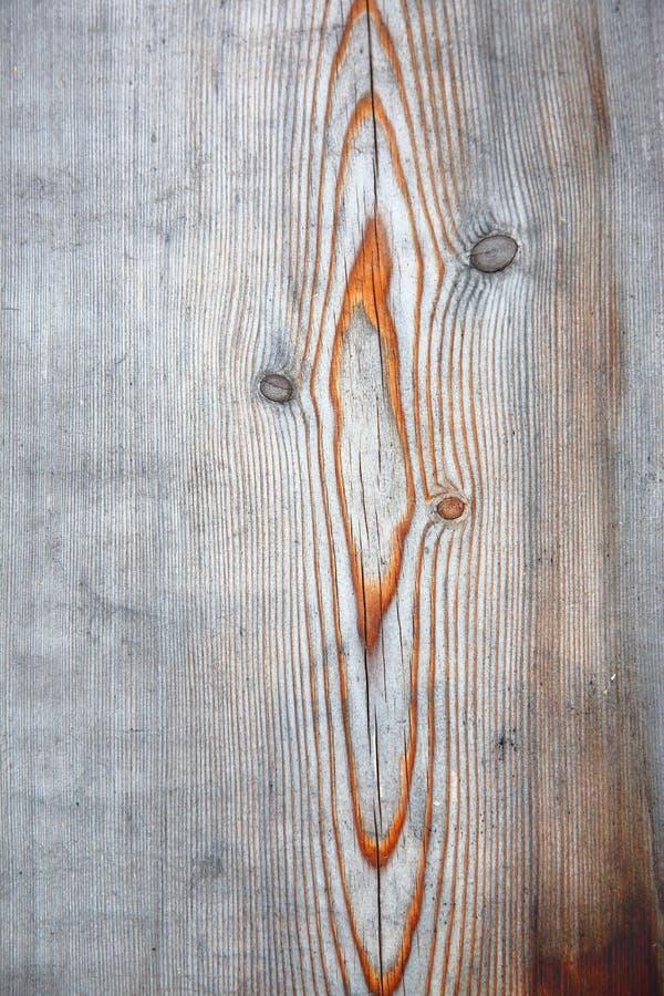 Żyły na wietrzejącym drewnie obraz royalty free