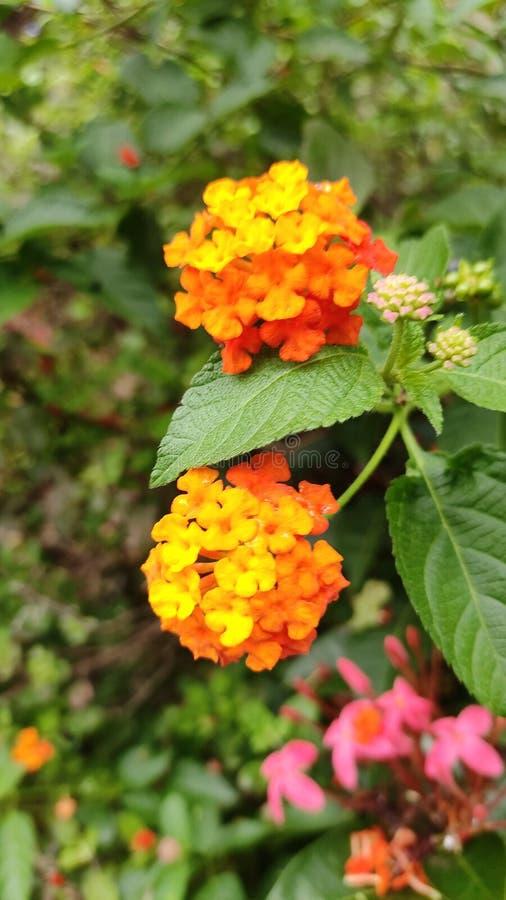 Y éstas son las flores amarillas que llevan a cabo las flores que vuelan y la naturaleza hermosa fotografía de archivo libre de regalías