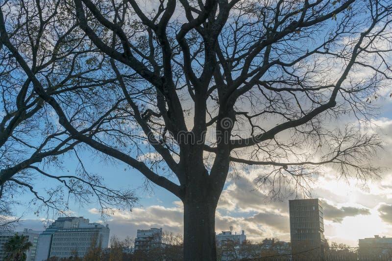 Y-träd som förbiser staden av Lissabon portugal royaltyfri fotografi