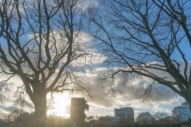 Y-träd som förbiser staden av Lissabon portugal royaltyfria bilder