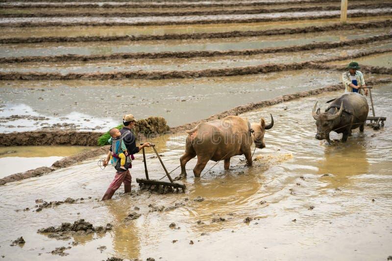 Y Ty, Vietnam - 12. Mai 2017: Terassenförmig angelegtes Reisfeld in der Wasserjahreszeit, wenn die Landwirte an dem Feld arbeiten stockfoto