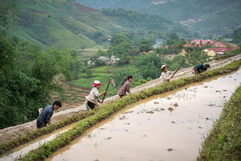 Y Ty, Vietnam - Mei 12, 2017: Terrasvormig padieveld in waterseizoen, met landbouwers die aan het gebied in Y Ty, Lao Cai-provinc stock foto