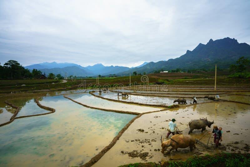 Y Ty, Vietnam - Mei 12, 2017: Terrasvormig padieveld in waterseizoen, met landbouwers die aan het gebied in Y Ty, Lao Cai-provinc royalty-vrije stock foto