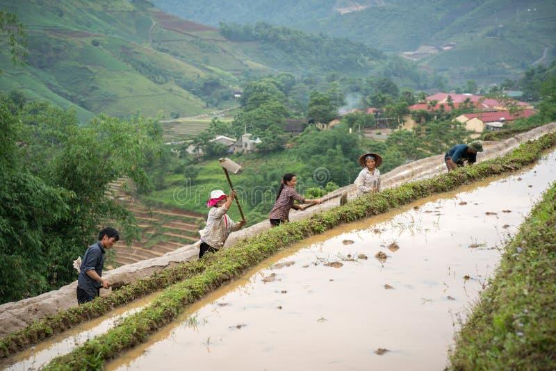 Y Ty, Vietnam - Mei 12, 2017: Terrasvormig padieveld in waterseizoen, met landbouwers die aan het gebied in Y Ty, Lao Cai-provinc stock foto's