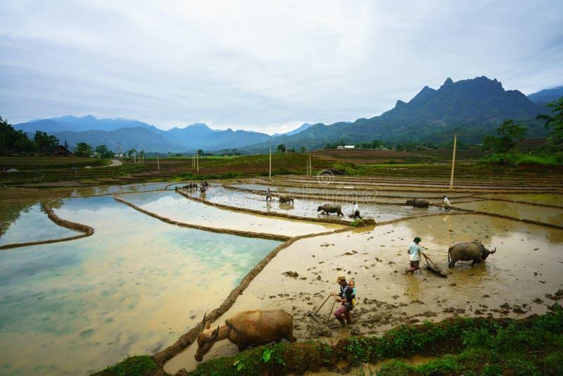 Y Ty, Vietnam - Mei 12, 2017: Terrasvormig padieveld in waterseizoen, met landbouwers die aan het gebied in Y Ty, Lao Cai-provinc royalty-vrije stock afbeeldingen