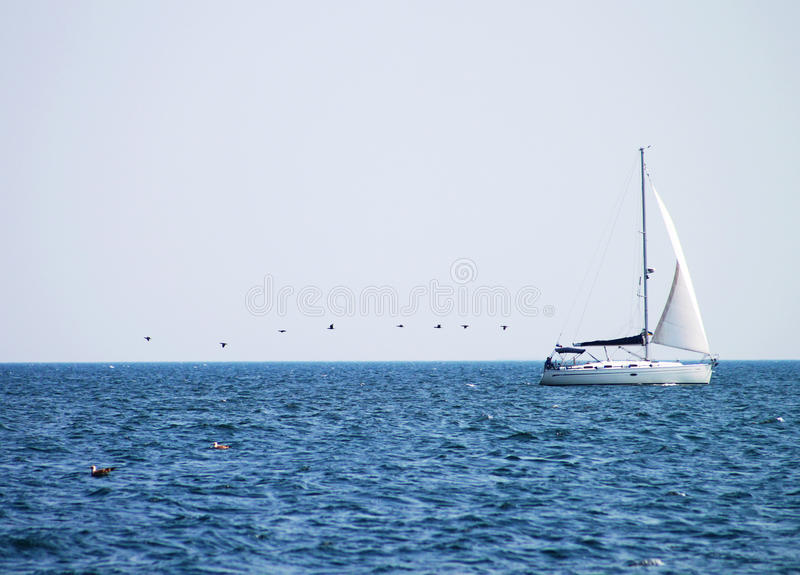 Yacht and birds royalty free stock image