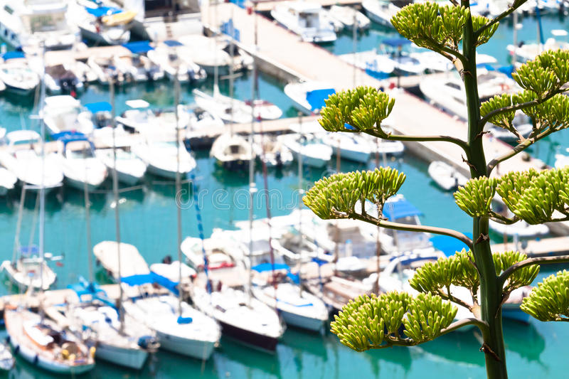 Yacht Harbor And Agave Stock Photography
