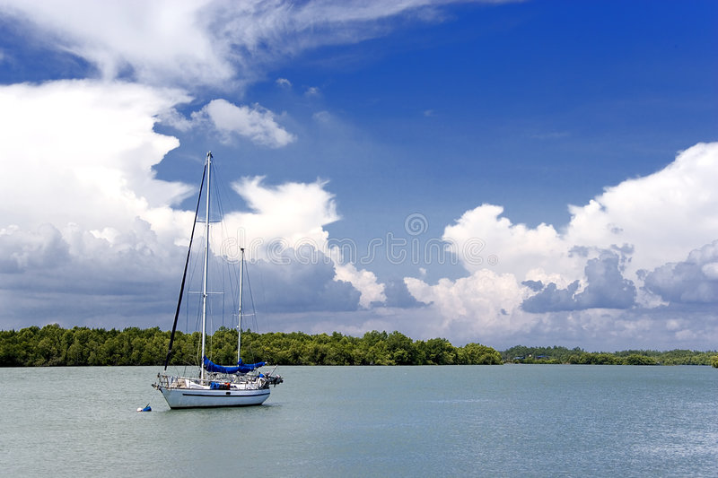 Yacht and Mangrove Swamp stock photography