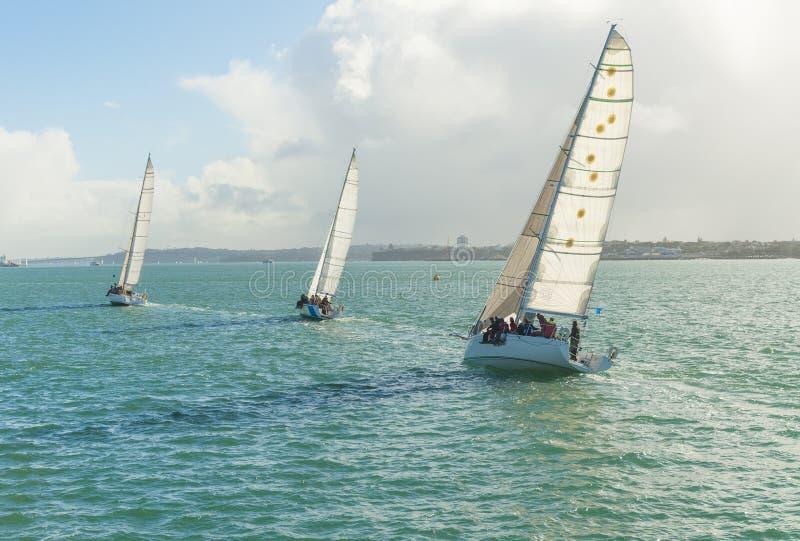 Yachten, die im Auckland-Hafen laufen stockfotos