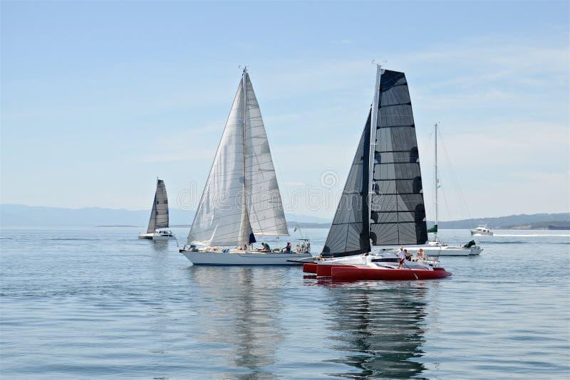 Yachten und Katamaran, wenn Rennen am sonnigen Sommertag gesegelt werden lizenzfreies stockfoto
