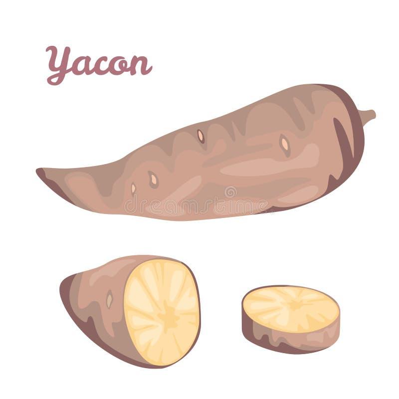 Yacon Vektorillustration einer süßen Wurzel stock abbildung