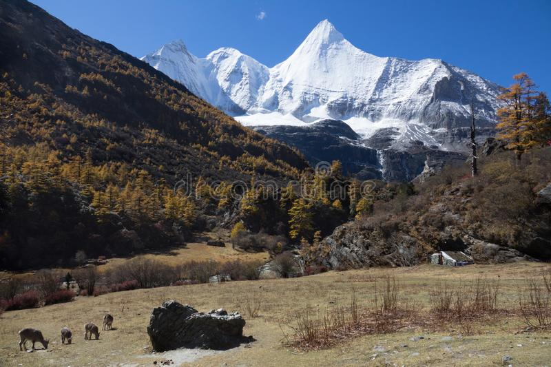 Yading. Mountain landscape,Snow Mountain in daocheng yading,Sichuan,China stock photo
