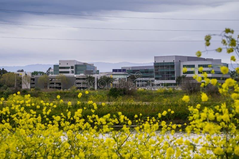 Yahoo-bureaugebouwen op de oever van de baai van San Francisco op een bewolkte de lentedag, wilde mosterd die op de steigers bloe stock foto