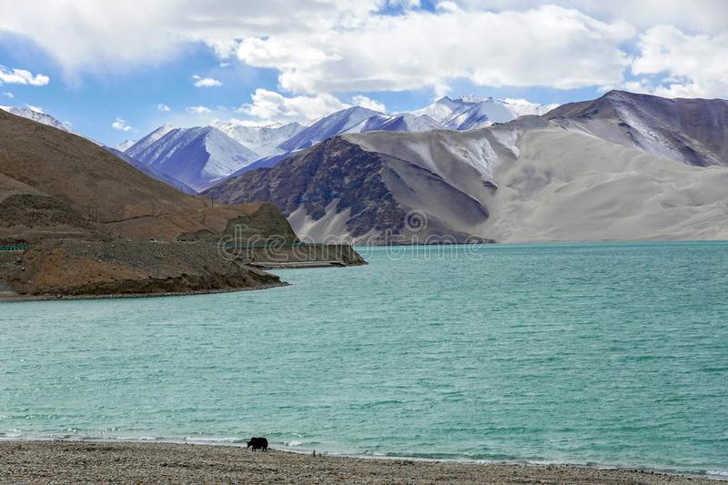 Yak,Green lake, snow mountain, white clouds, blue sky in Pamirrs royalty free stock photos