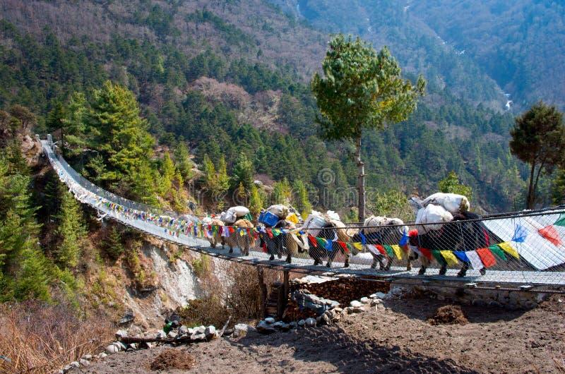 Yak στη γέφυρα στο Νεπάλ στοκ φωτογραφίες