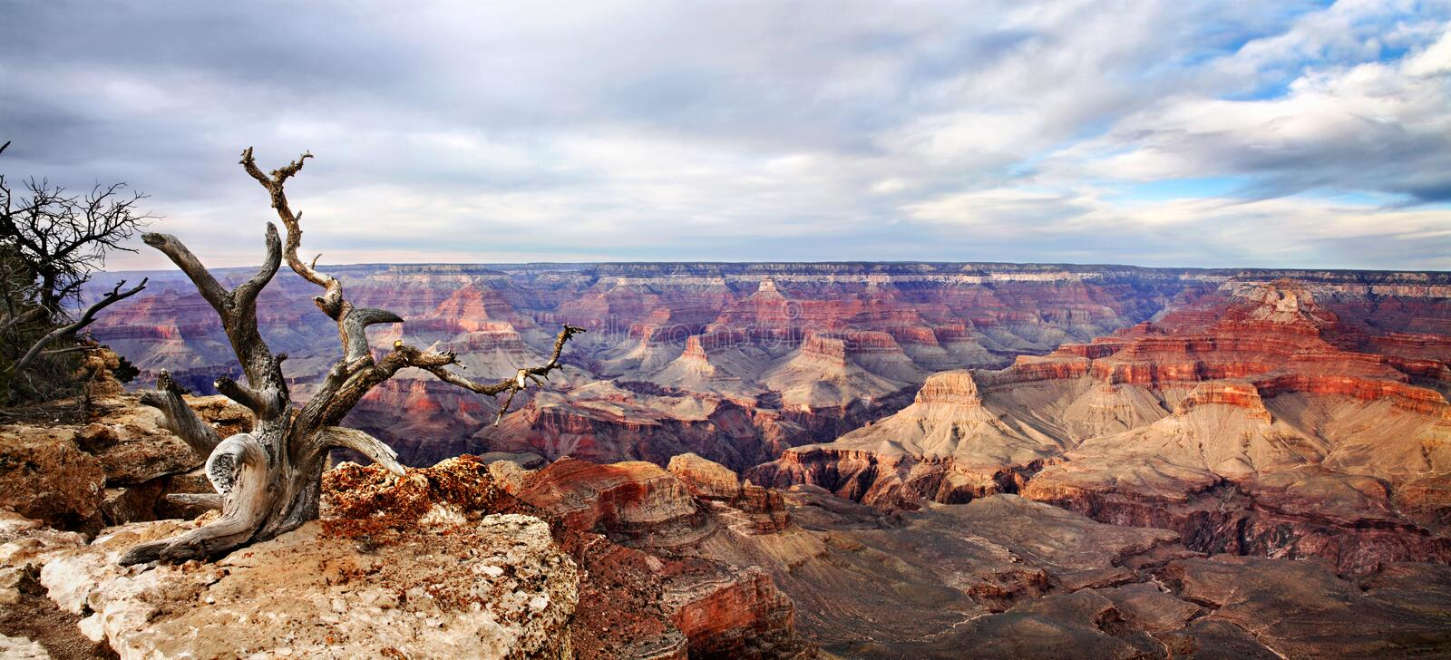 Yaki Point Panorama. A Dead Tree At The Edge, Yaki Point Overlook, South Rim View, Grand Canyon National Park, Arizona, USA royalty free stock images