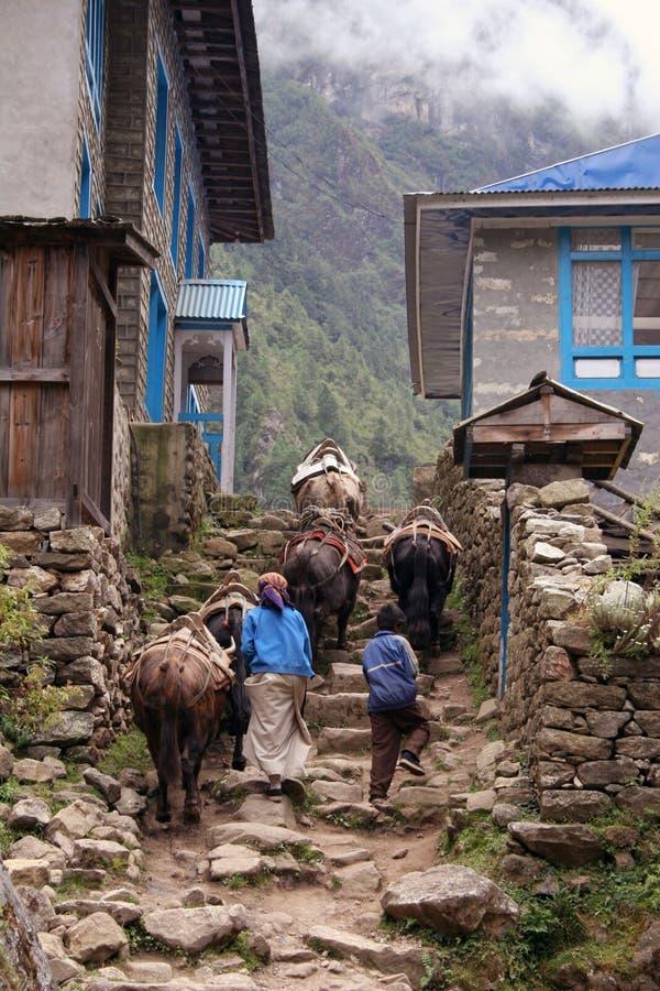 Yaks de l'Himalaya photographie stock libre de droits