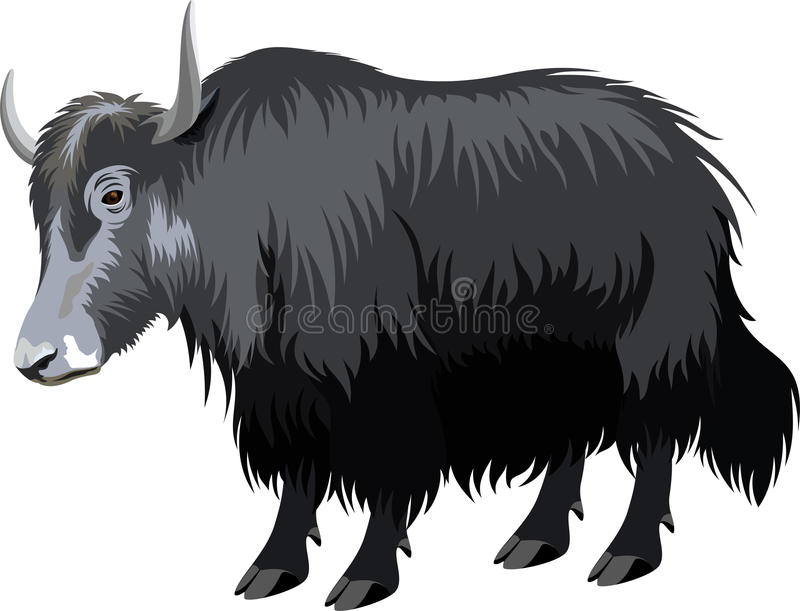 Yaks de Tibétain de vecteur illustration stock