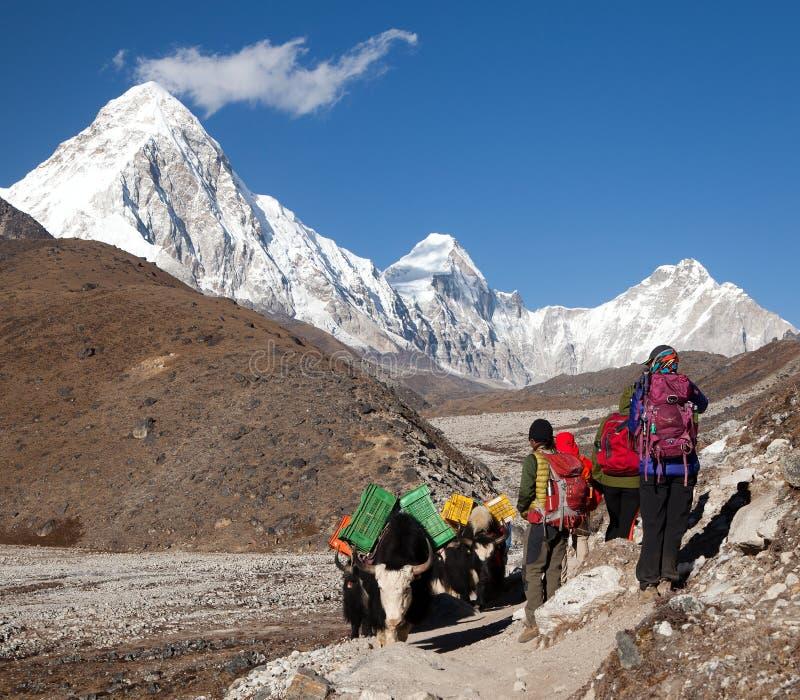 Yaks et touristes sur le chemin au camp de base d'Everest photos stock