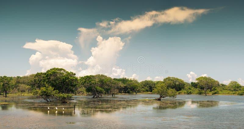 Yala国家公园斯里兰卡 美丽的洪泛区的看法 图库摄影