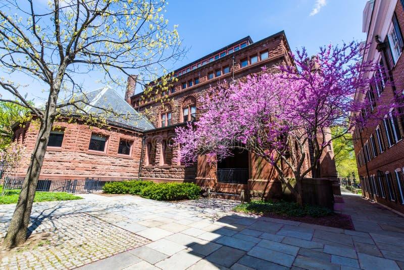 Yale University i New Haven Connecticut royaltyfri foto