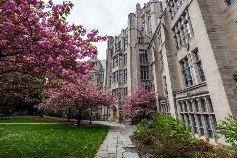 Yale University in New-Haven Connecticut lizenzfreies stockfoto