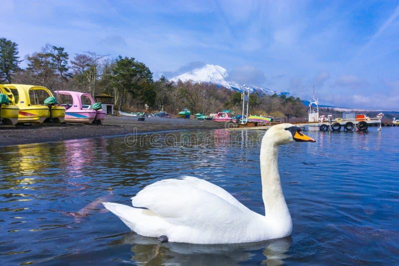 Yamanaka lake with fuji mount background and swan stock photos