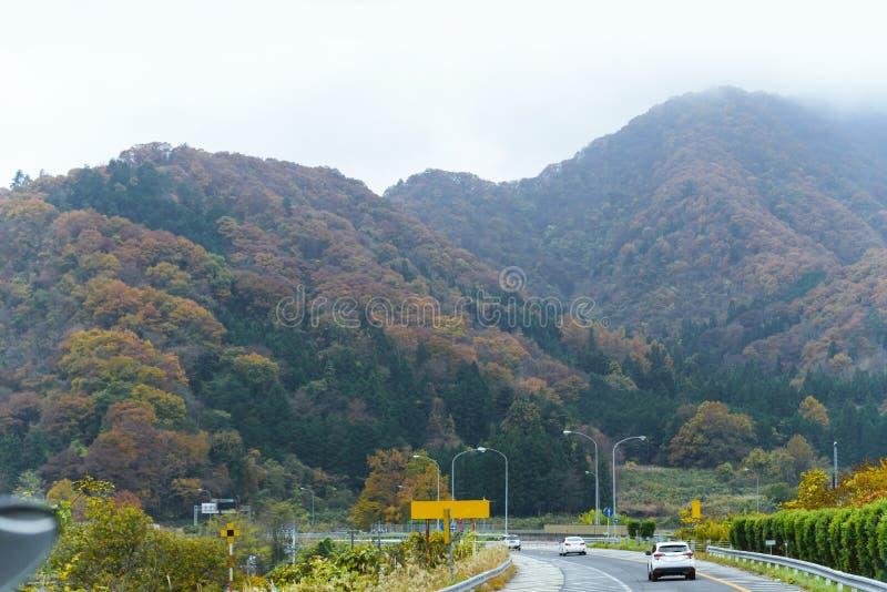осень красочная Японии, кленовых листов изменяет дерево на срочной дороге шоссе, дорогу цвета к yamanashi, Японии стоковое изображение