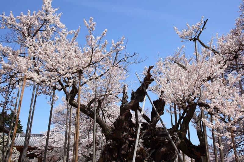 Download Yamataka Jindai佐仓 库存照片. 图片 包括有 蓝色, 横向, 季节, 植物群, 本质, 生气勃勃 - 30330946