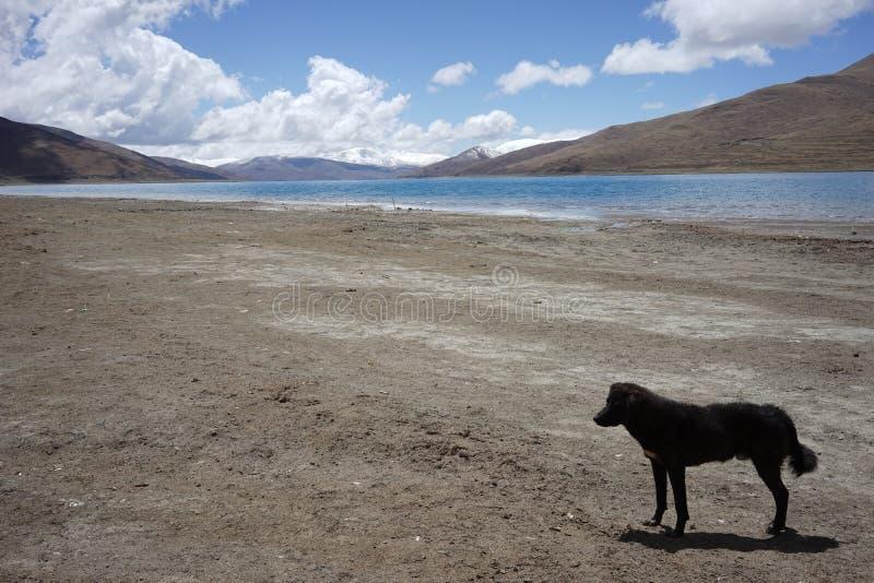 YamdrokTso sjö i Tibet arkivfoton