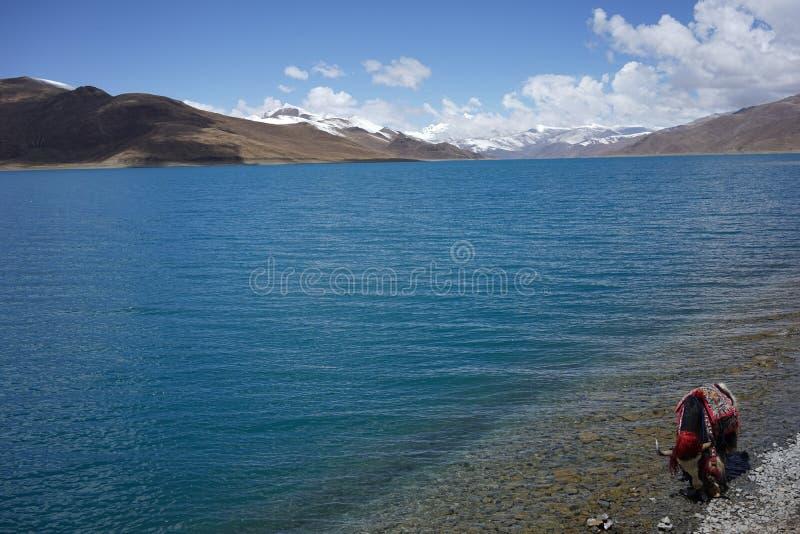 YamdrokTso sjö i Tibet arkivbilder