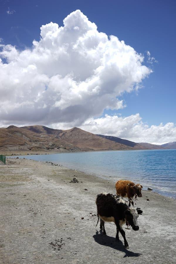 YamdrokTso sjö i Tibet royaltyfria foton