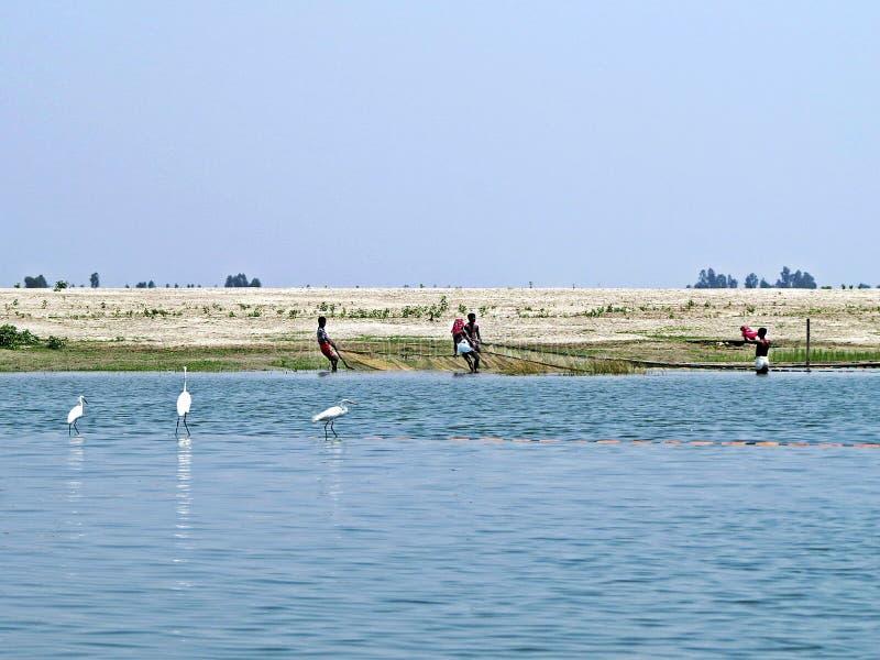 Yamuna River, Brahmaputra River, Bogra, Bangladesh. Fisher men pulling net, Yamuna River, Brahmaputra River, Sariaknadi, Bogra Bangladesh stock image