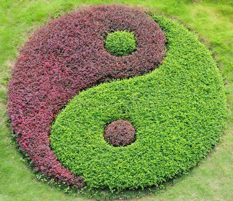 yang yin zdjęcie stock