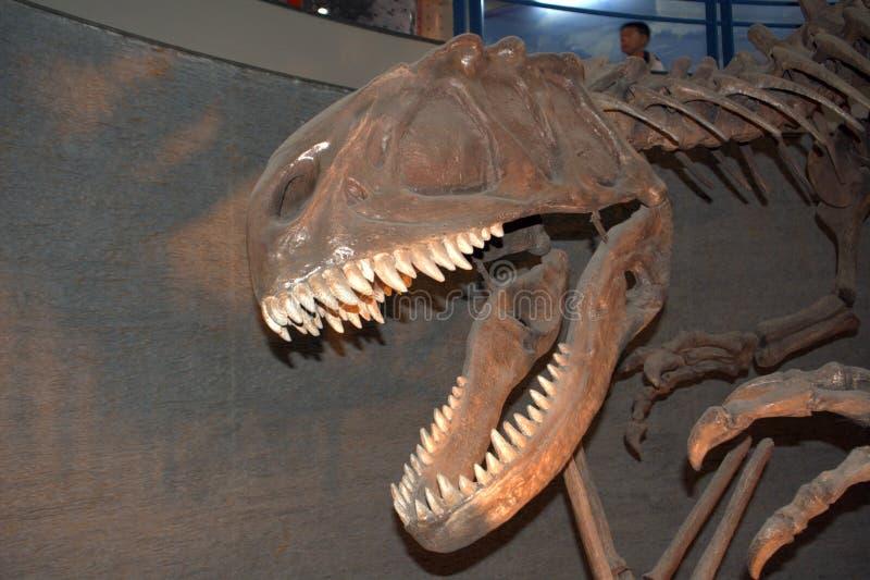 Yangchuanosaurusshangyuensis, Peking, China royalty-vrije stock foto's