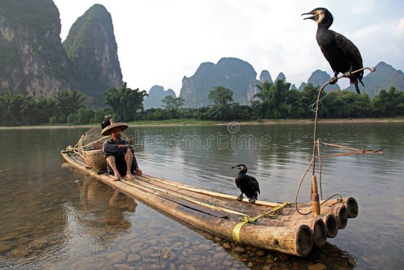 YANGSHUO - 18 GIUGNO: Pesca cinese dell'uomo con gli uccelli dei cormorani fotografia stock