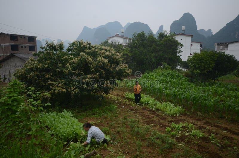 Yangshuo sceneria zdjęcia royalty free